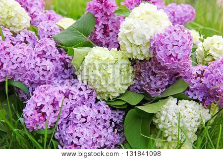 bouquet of flowers lilac and viburnum decorative, delicate lilac flowers and buldenezh ,form snowballs, white with a hint of green