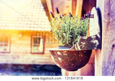 Home decoration with hanging flower pot with lavender