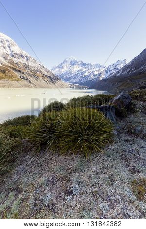 Green plant as a foreground with Mount Cook as background.