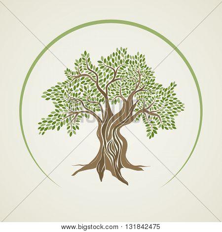 Retro style olive tree vector illustration.