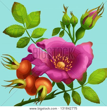 Bright wild rose on a blue background