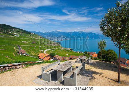 Vineyards of the Lavaux region over lake Leman (lake of Geneva)Switzerland