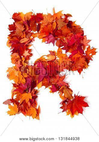 Alphabet Sign From Autumn Leaf