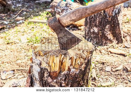 Old axe in wood at sunny weather