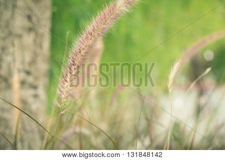 Flower grass in the garden. Flower grass. Flower grass with blurred background.(vintage effect)