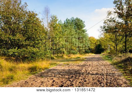 Sandy path through the Dutch forest on a sunny day in the fall season.