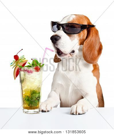 dog in sunglasses with Mojito isolated on white