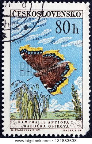 CZECHOSLOVAKIA - CIRCA 1961: a stamp printed in Czechoslovakia shows Mourning Cloak Nymphalis Antiopa is a Large Butterfly native to Eurasia and North America circa 1961
