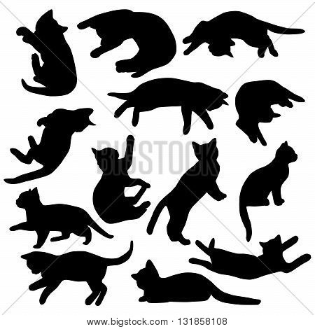 Set of vector kitten isolated in white background.