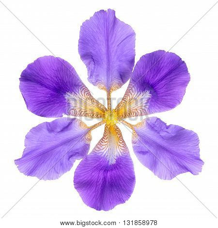 Abstract Fantastic Lilac Iris Flowers On Is Isolated On White Background, Close Up