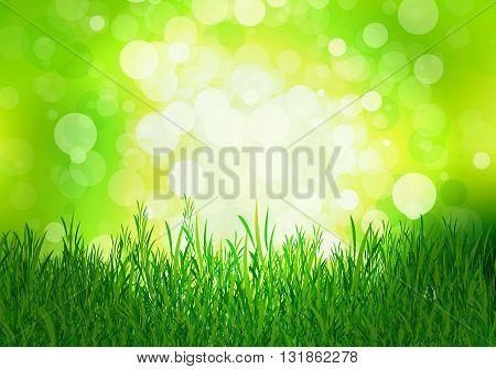 Grass on a background of green beech, vector art illustration.