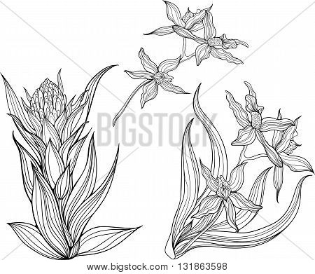 Three isolated black and white flowers. Coloring page.
