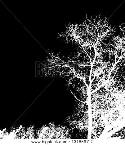 Silhouette of dry tree branches, isolated on black