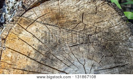 The texture of the cut logs. Closeup