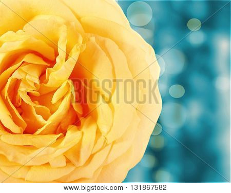 Floral background with beautiful flowers and lights