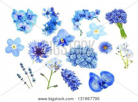 Collage of blue color flowers, isolated on white