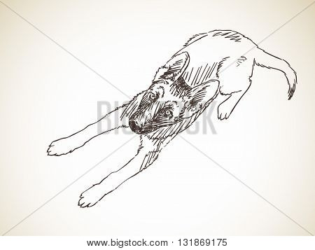 Sketch of dog looking up. Hand drawn illustration. Isolated