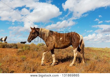 Horse on meadow