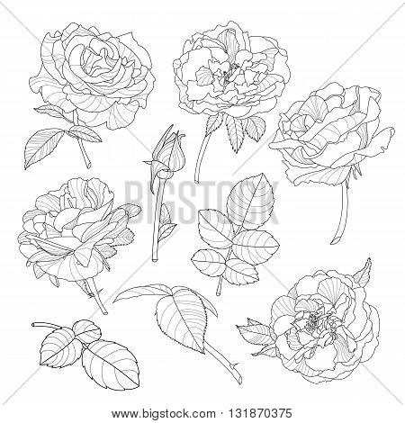 Set Of Vector Isolated Rose Flowers. Black And White Outline Hand Drawn Rose Flowers. Beautiful Flor