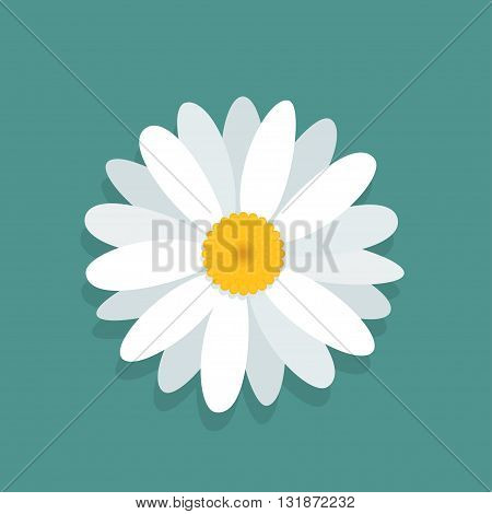 Vector chamomile flower isolated on blue background