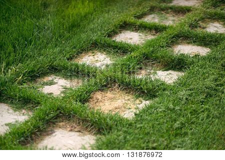 Path of stone tiles, laid on the lawn. Beautiful well-kept green grass.