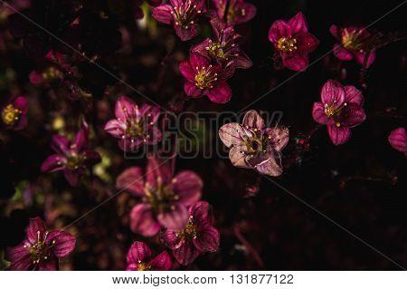 a Background of little purple flowers. Macro shooting