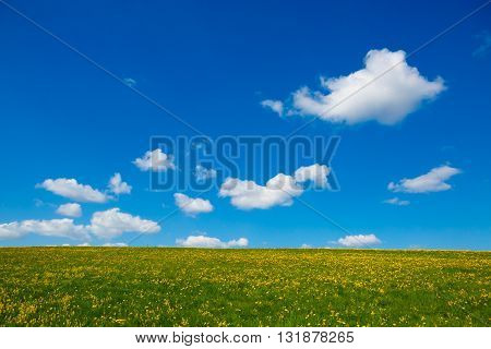 Rural  landscape to the flower meadow and the blue sky. Pastoral panorama of nature summer. Beautiful landscape of a Sunny day. Field with yellow dandelions to the horizon.