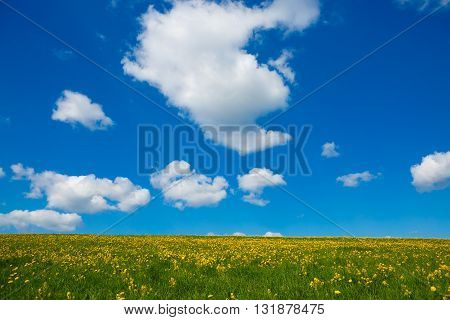 Rural views to the flowers meadow and clouds. Field with yellow dandelions to the horizon. Pastoral panorama of nature summer. Beautiful landscape of a Sunny day.