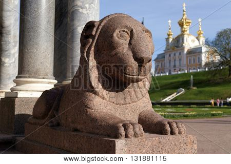 PETERHOF, ST. PETERSBURG, RUSSIA - MAY 7, 2016; Sculpture of lion at the Vorinikhinsky colonnade. The colonnade was erected in 1803 by the architect Andrey Voronikhin