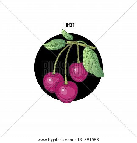 Vector illustration of cherries in a black circle on a white background. Design of packaging food products cosmetics shampoos health supplements.