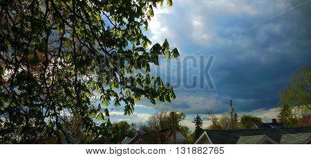 Blue Dark sky through the Leafy Green Tree