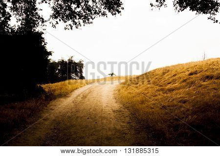 Hiking trail surrounded by dry brush and oak trees