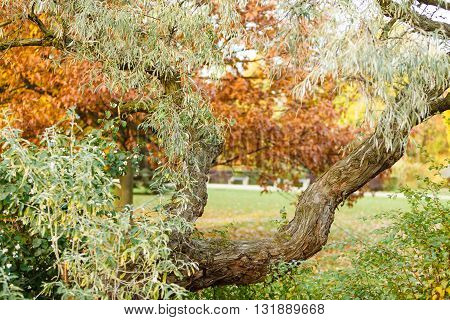 Nature outdoor flora woodland scenery concept. Branch in colorful park. Wood surrounded by various vegetation.