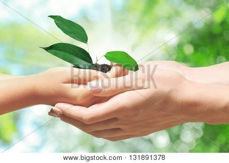 Sprout in child and mother hands on green nature background. Concept of new life, taking care, protection, helping and assistance