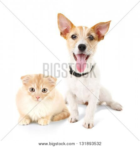 Cat and dog together, isolated on white
