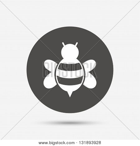 Bee sign icon. Honeybee or apis with wings symbol. Flying insect. Gray circle button with icon. Vector