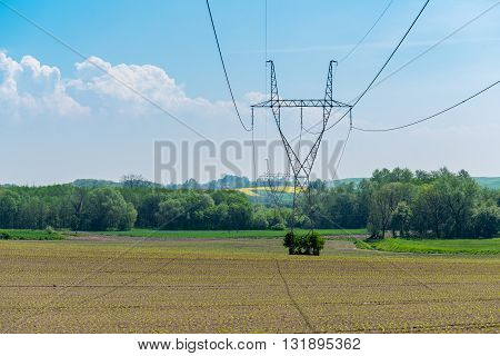 Powerlines On Colza Field