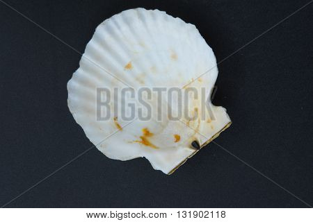 empty of scallops shell on black table (See Pectinidae)