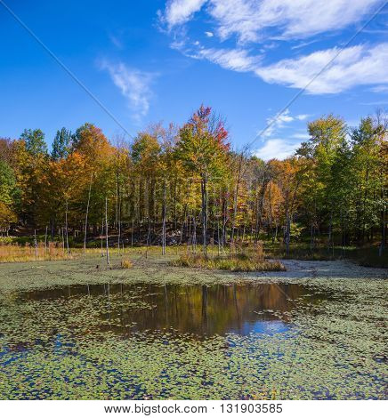 Small overgrown lilies lake in the autumn park. Sunny warm day in October in French Canada