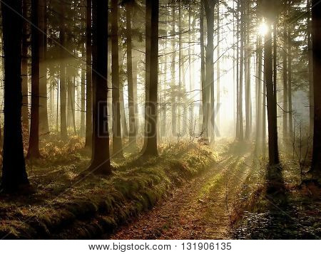 Forest path at sunset with silhouette of trees