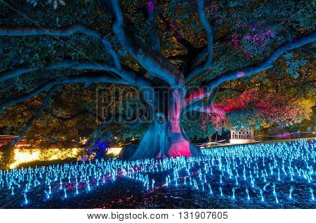 Sydney Australia - 2016 May 27: Annual outdoor lighting festival Vivid Sydney: Festival of Light Music and Ideas. Will of the Wisps light installation in The Royal Botanic Garden