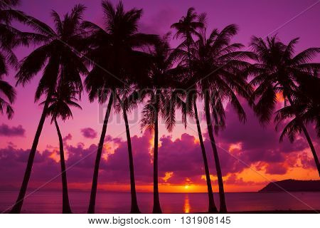Palm trees silhouette at sunset on tropical island Thailand
