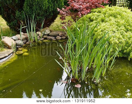 Beautiful classical garden fish pond surrounded by grass gardening background
