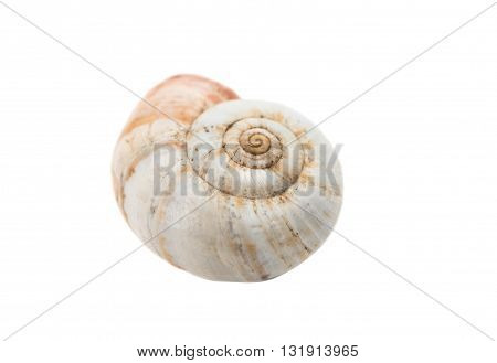 snail shell isolated on a white background