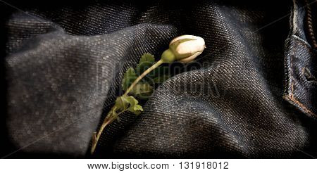 blue, yellow, gray, one, white, flower, frame, color, black, wild, rose, part, jeans, bud, a bud, rose lies, wild a rose, white a rose