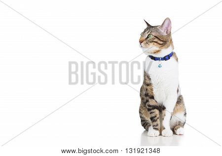 Cat looking too right isolated on white background.