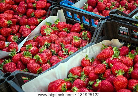 Boxes of red strawberries in farmer market. Sweet strawberries