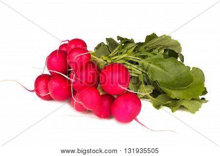 Bunch of radish isolated on white background