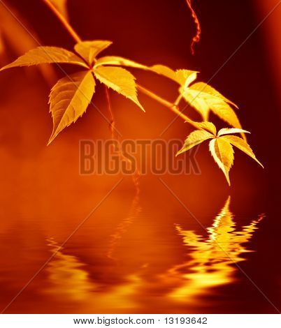 Golden leaves reflected in rendered water