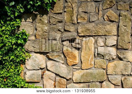massive wall of sandstone blocks overgrown with ivy - texture background